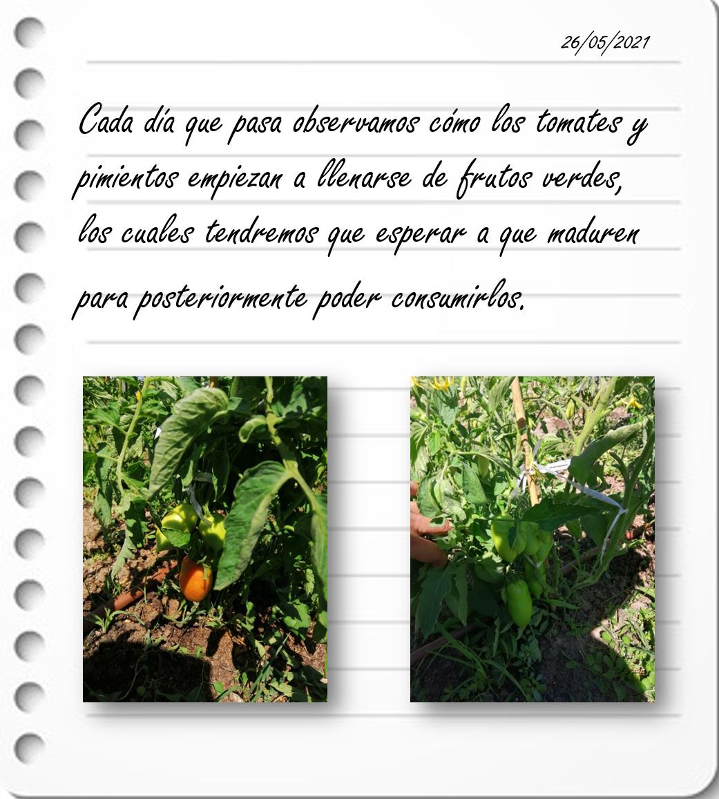 Huerto Verde